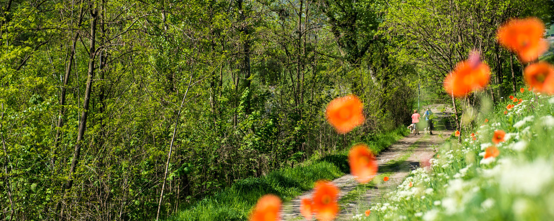 Botanische-Wanderung