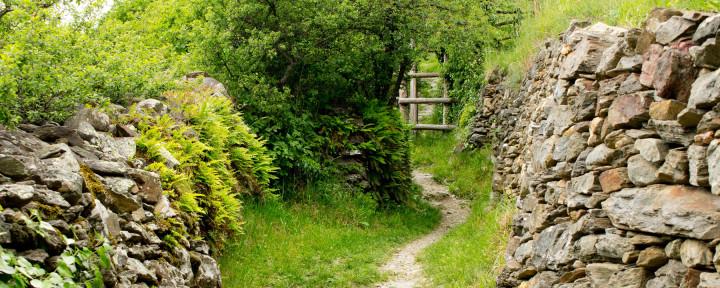 UrwegeAlgund-Vellau_Natursteinmauer-am-Wegesrand_bei-Unterstell